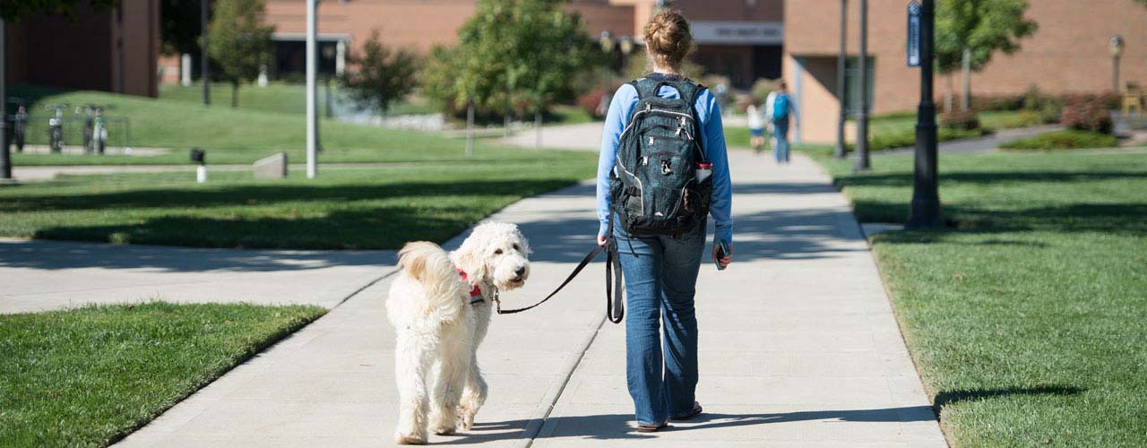Cedarville students with service dogs walks down the sidewalk away from the camera. The dog turns to look back at the camera.