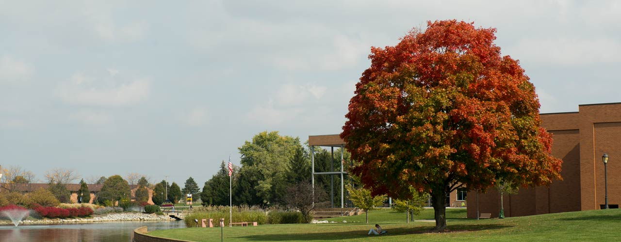 A fall tree on Cedarville's campus