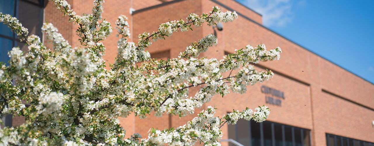 tree in bloom outside library