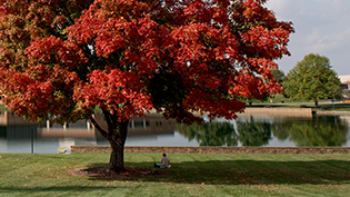 A large tree with fall foliage by Cedar Lake