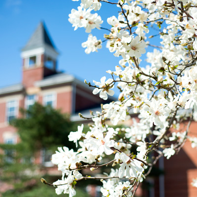 Dogwood trees bloom in front of Founders Hall