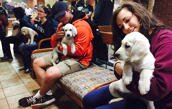 4Paws puppies on campus