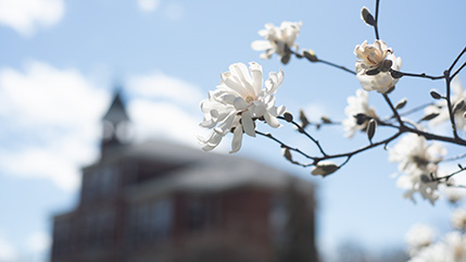 Founders Hall with white flowers in foreground.