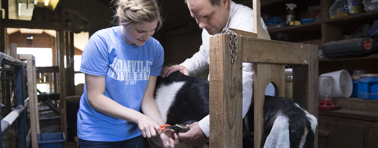 Professor and student trim a goats hoof